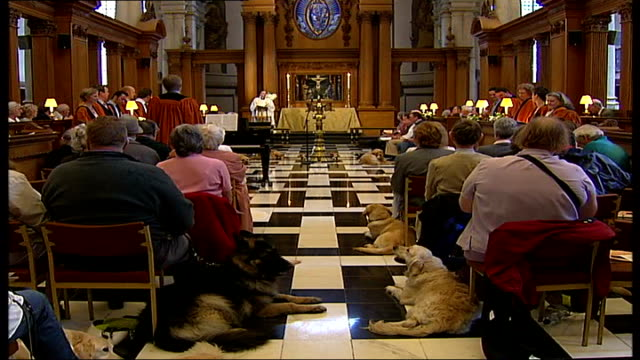 London Guide Dogs 75th year celebrations / general views of people and guide dogs at special church service Back view of people with guide dogs...