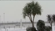Heathrow EXT / SNOWING Snowcovered New Zealand cabbage tree palm Cabin crew and pilots leaving hotel Snowstorm on runway as barely visible Air New...