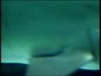 London London Aquarium INT CMS Shark swimming in tank among small fish CMS Small fish along CMS Shark along CMS Small fish swimming CMS Shark towards...