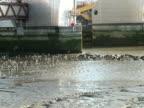 London: Fluss Themse Barrier Überschwemmung Klimaanlage, ziehen von Seevögeln