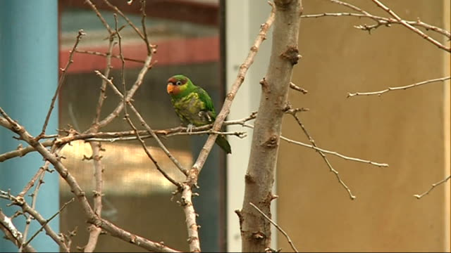 London Zoo backs campaign to protect most endangered birds Various shots birds in enclosure