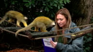 London Zoo carries out annual measurement and stocktake ENGLAND London Regent's Park London Zoo EXT Bird standing on rock / penguins in enclosure /...