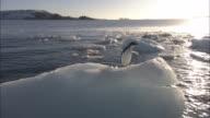 MS, Lone Adelie Penguin (Pygoscelis adeliae) on iceberg, Antarctica