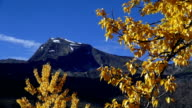 Lone jagged mountain peak with golden leafed tree blowing in the wind in foreground.