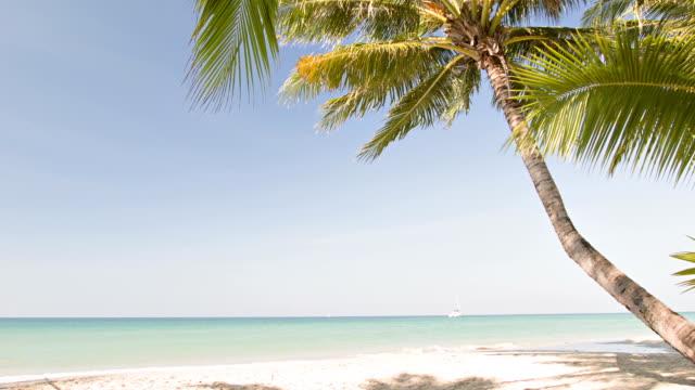 Een eenzame palm op een strand