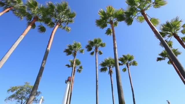 Long Beach-HD-Videos