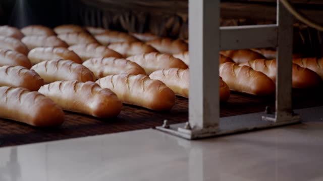 Long loaves of fresh crusty bread on conveyor
