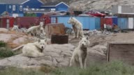 Long Shot A sled dog is seen as icebergs that broke off from the Jakobshavn Glacier are seen in the water on July 17 2013 in Ilulissat Greenland As...