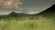 Long shot across the fertile Shire Highlands.