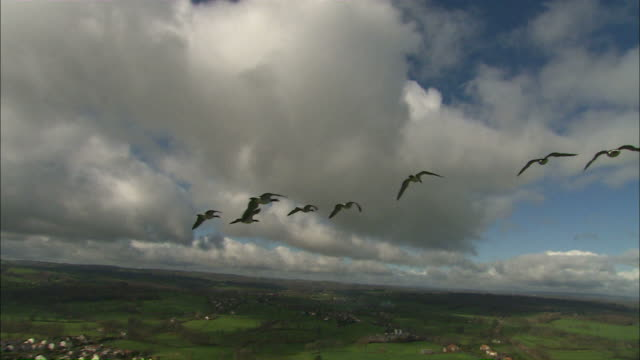 Long Shot aerial - Geese fly over agricultural fields and towns, POV from plane / France