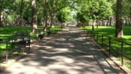 Long shot of path in city park lined with benches and trees