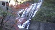 Long shot of the Fukuroda Falls and trees in autumn foliage, Ibaraki, Japan