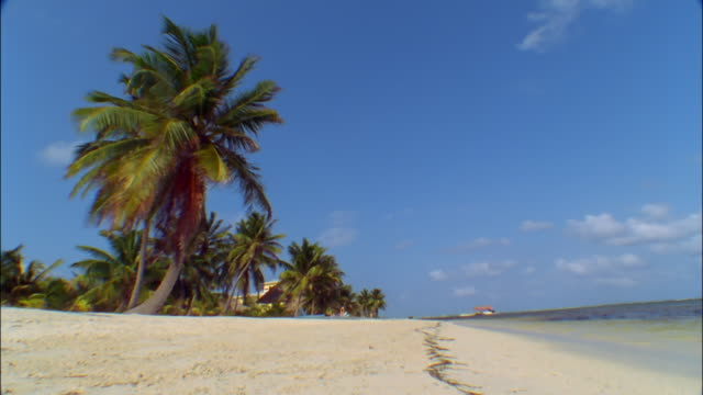 Long shot palm trees blowing in wind on beach / hut at end of pier in distance / Ambergris Caye, Belize