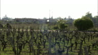Long Shot pan-right zoom-out - Vineyards stretch across the French countryside. / Bordeaux, France