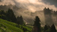Long shot: Sea of clouds over the tea fields in a steep valley of the Ryogo-uchi area, Shizuoka, Japan