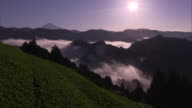 Long shot: Tea fields in a steep valley, and a sea of clouds amid the mountains of the Ryogo-uchi area, Shizuoka, Japan