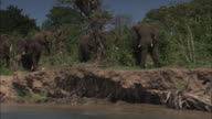 Long Shot tracking-left - Elephants stand in a riverbank in Zambia. / Zambia