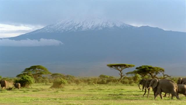 Long shot view of Mt. Kilimanjaro / elephant herd crossing savanna / Amboseli National Park / Kenya