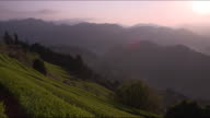 Long shot:Mountains and tea fields in the Ryogo-uchi area, Shizuoka, Japan