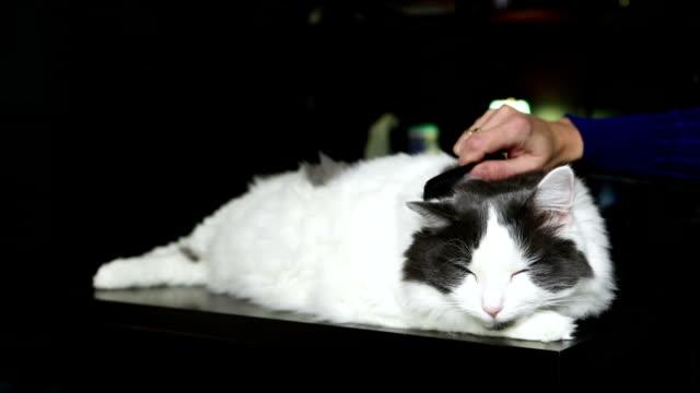 Longhair Cat Bring Combed