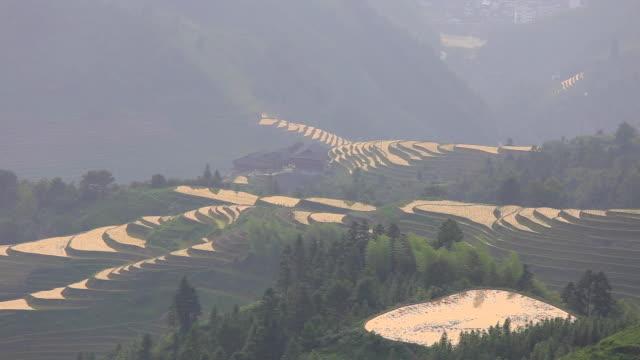 Longji Terrassenfeldern bei Longsheng, Guilin, China