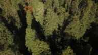 Looking down LOWER to trees fly over Redwood Forest, Aerial, 4K, 45s, 47of50, Forest Trees, Northern California Tallest trees in the world, Sun flare, Hyperion Tree, world record, Stock Video Sale - Drone 4K Nature/Wildlife/Weather Drone aerial video