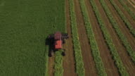 Looking down on tractor harvesting, 4K Video of Cornfield and agriculture production like corn, wheat, soybean, sunflowers, and vineyards with tractor, logging