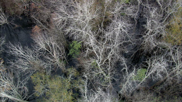 Looking Down through Trees To Swamp  - Aerial View - Georgia,  Wayne County,  United States