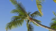 Looking up at bare palm tree on clear sky background