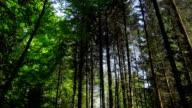 GIMBAL Blick auf Frühling Wald Baum Tops (4 k UHD zu/HD)