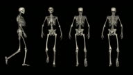 Loopable, POSTURES, Four views of walking skeleton