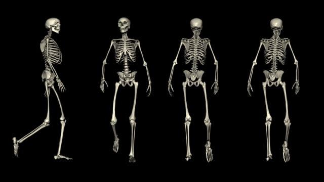 Loopable, POSTURES, Four views of walking skeleton