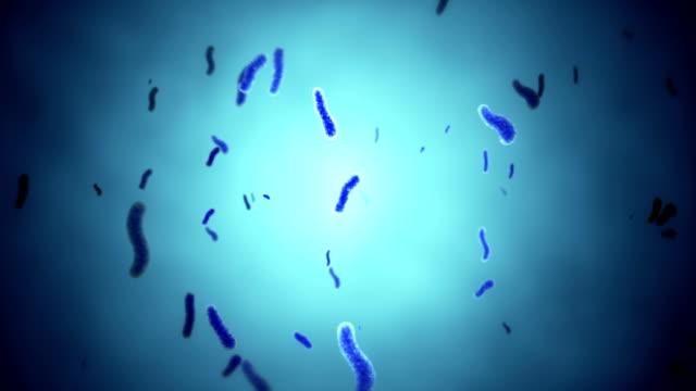 HD: Loopable Shot Of Bacteria