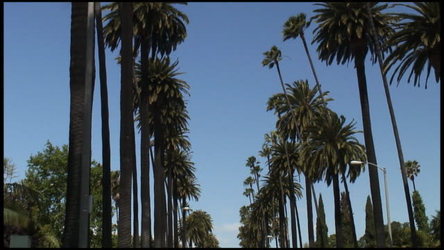 (HD1080i) Los Angeles: Beverly Hills Palm Tree Row