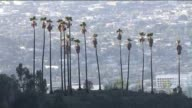 Los Angeles in the backdrop of a row of palm trees