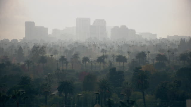 WS, Los Angeles skyline covered with smog, palm trees in foreground, California, USA