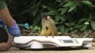 Los cuidadores del zoologico de Londres realizan el pesaje anual de los animales una tarea que pinguinos monos y reptiles pueden volver bastante...