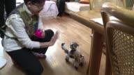 Los perros robots pueden ser la mascota perfecta