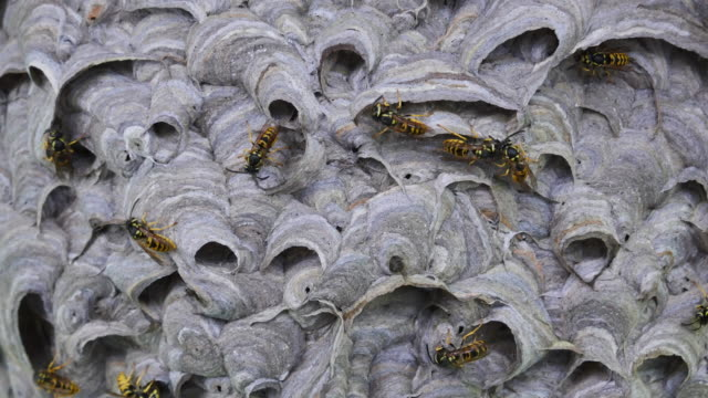 A lot of wasps at nest building overview