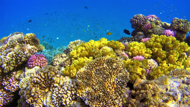 Lots of colorful fishes at Coral reef on Red Sea