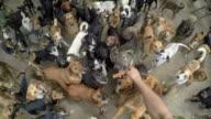 Un sacco di cani mangiare insieme in pace