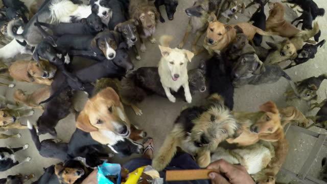 Viele Hunde Essen zusammen in Frieden