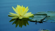 Lotus flower and reflect on water in pond