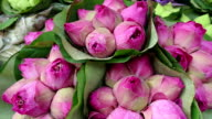 Lotus Flower Buddhism