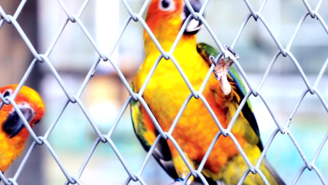 Lovely Parrots In The Cage