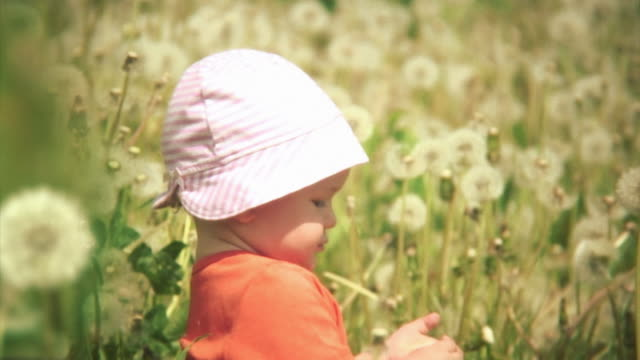 Lovely scene with a baby surrounded by dandelions. HD