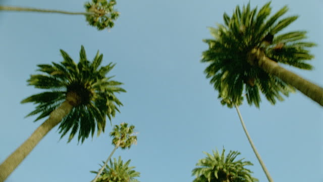 Low angle car point of view looking up at palm trees and sky while driving in Beverly Hills / Los Angeles, California