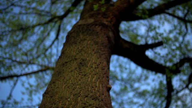 Low angle-Aufnahmen von Bäumen. Drehen Aufnahme von Baumwipfel.