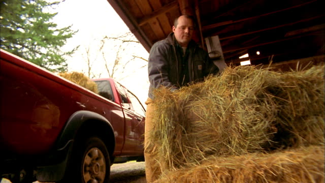 Low angle man lifting stacks of hay and putting into pickup truck