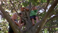 Low angle medium shot boys sitting in tree smiling down at CAM / New York